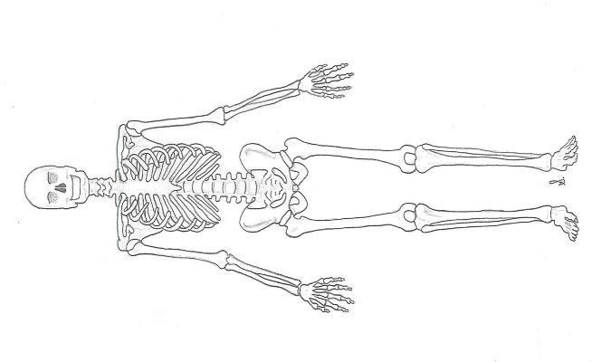 Lehrbrief 1 – 1.3 Das Skelett